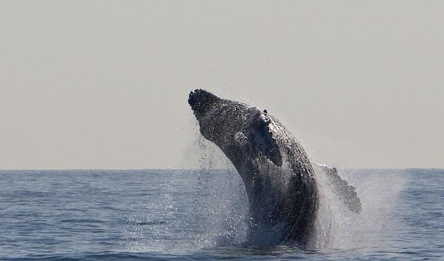humpback-whale-1324633640